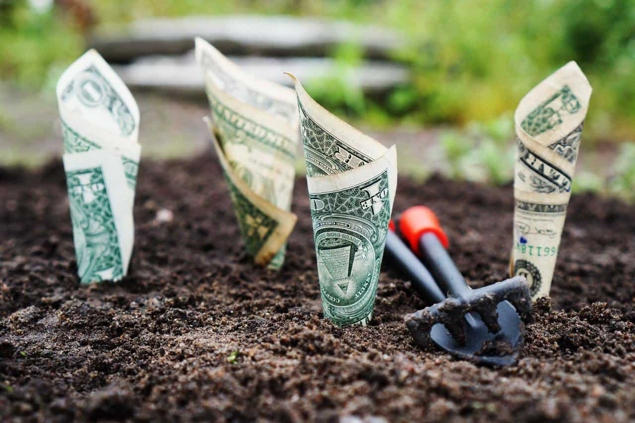 Dollar bills planted in the ground