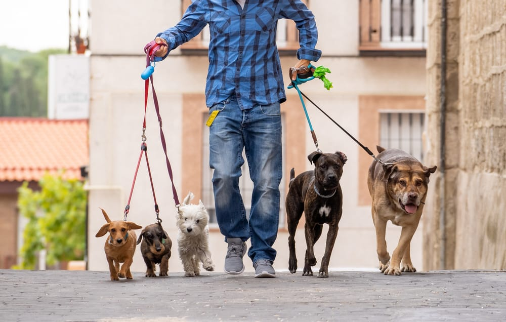 How to Find Dog Walking Jobs Near You